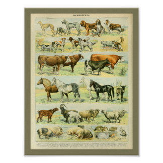 Copie vintage d'animaux de ferme de couleur