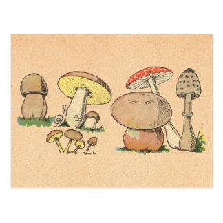 Copie vintage de champignon carte postale