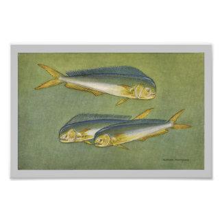 Copie vintage de poissons de poissons de dauphin tirages photo