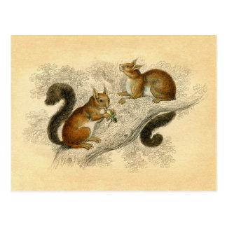 Copie vintage d'écureuil carte postale