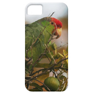 Coque Barely There iPhone 5 Faune sauvage d'animaux d'oiseaux de perroquet