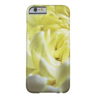 Coque Barely There iPhone 6 Cas Chute-Orienté - plan rapproché de chrysanthème
