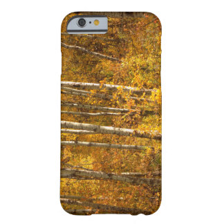 Coque Barely There iPhone 6 Or