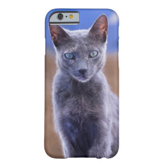 Coque Barely There iPhone 6 Séance femelle de chat, Maroc