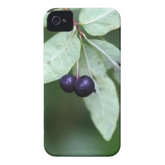 Coque Case-Mate iPhone 4 Chèvrefeuille berried par noir (nigra de Lonicera)