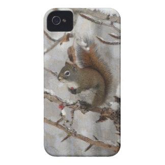Coque Case-Mate iPhone 4 Écureuil d'hiver, neige et conception rouge de