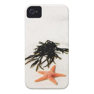 Coque Case-Mate iPhone 4 Étoiles de mer oranges sur une plage sablonneuse