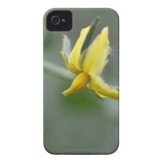 Coque Case-Mate iPhone 4 Fleur d'un plante de concombre