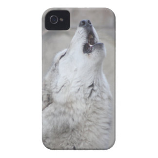 Coque Case-Mate iPhone 4 Loup d'hurlement