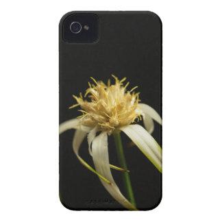 Coque Case-Mate iPhone 4 Tête d'un whitetop de starrush, colorata de