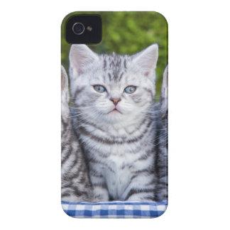 Coque Case-Mate iPhone 4 Trois jeunes chats tigrés argentés dans le panier