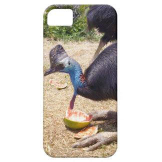 Coque Case-Mate iPhone 5 Oiseau de casoar mangeant des melons,
