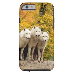 coque iphone 6 loup blanc
