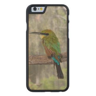 Coque En Érable iPhone 6 Case Oiseau d'abeille-mangeur d'arc-en-ciel, Australie