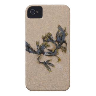 Coque iPhone 4 Algue sur une plage sablonneuse les Cornouailles