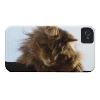 Coque iPhone 4 Cas de téléphone d'animal familier de chat de