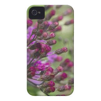 Coque iPhone 4 Case-Mate Bourgeons géants pourpres de fleur sauvage d'herbe