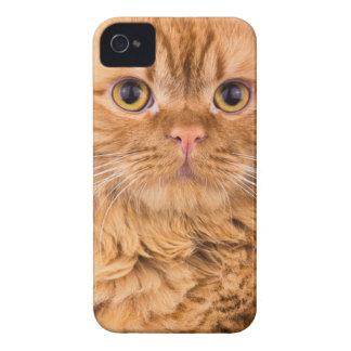 Coque iPhone 4 Case-Mate chat mignon