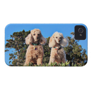 Coque iPhone 4 Case-Mate Épuisement - caniches - Romeo Remy
