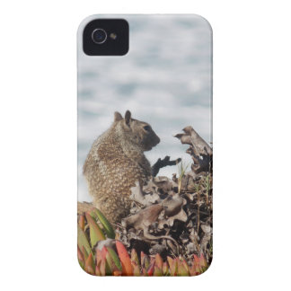 Coque iPhone 4 Case-Mate Petit écureuil