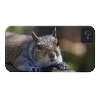 Coque iPhone 4 Case-Mate Photographie mignonne de nature d'écureuil de bébé