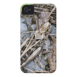 Coque iPhone 4 Case-Mate Sauterelle camouflée