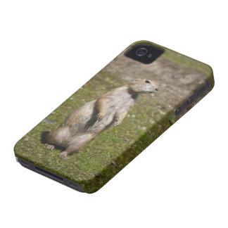 Coque iPhone 4 Chien de prairie à queue noire