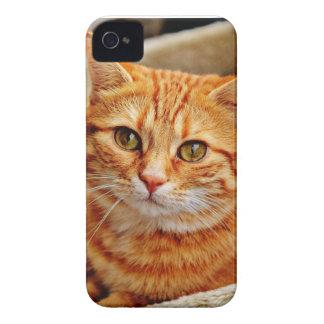Coque iPhone 4 Cute Orange Cat