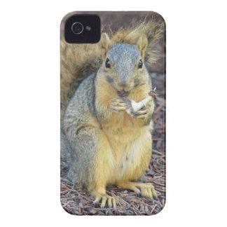 Coque iPhone 4 Écureuil affamé heureux