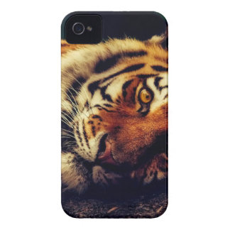 Coque iPhone 4 Faune animale de tigre reposant le macro plan