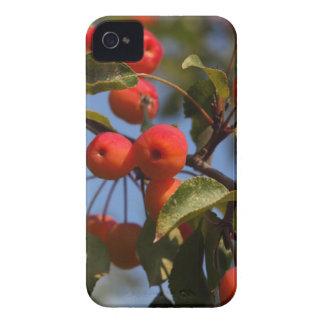Coque iPhone 4 Fruits d'un pommier sauvage