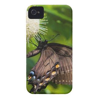 Coque iPhone 4 Machaon femelle foncé de tigre sur le fleur