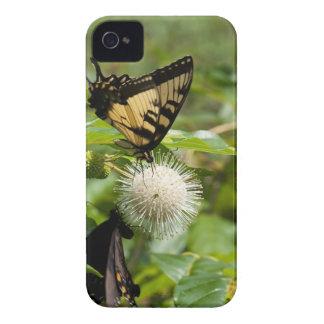 Coque iPhone 4 Papillon de machaon de tigre sur le fleur sauvage