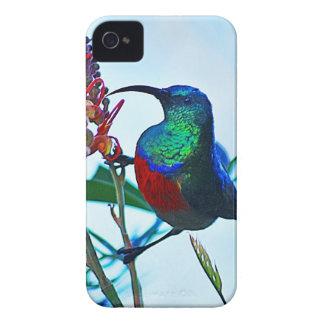 Coque iPhone 4 Rubis de colibri throated