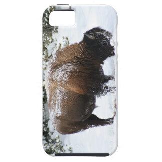 Coque iPhone 5 Case-Mate Bison dans la poignée de l'hiver de Yellowstone