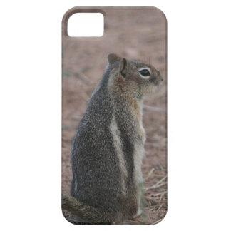 Coque iPhone 5 Écureuil réfléchi