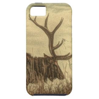 Coque iPhone 5 élans rustiques de Taureau de faune de région