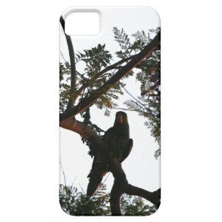 Coque iPhone 5 Faune sauvage d'animaux d'oiseaux de perroquet