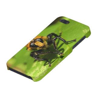 Coque iPhone 5 Mouche de voleur