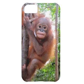 Coque iPhone 5C Orang-outan de bébé d'Uttuh dans la jungle
