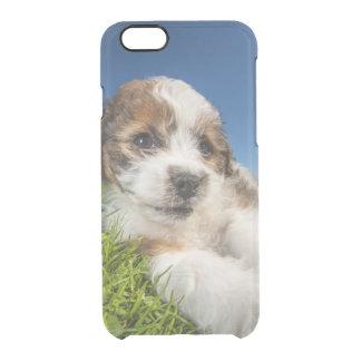 Coque iPhone 6/6S Chiot mignon (Shitzu)