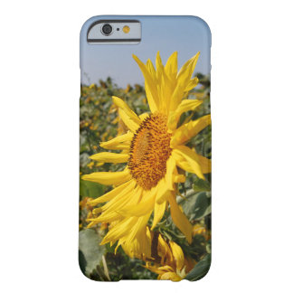 Coque iPhone 6 Barely There Caisse de tournesol pour Iphone 6/6s