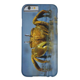 Coque iPhone 6 Barely There Crabe d'or