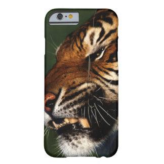 Coque iPhone 6 Barely There Fin de tête de tigre