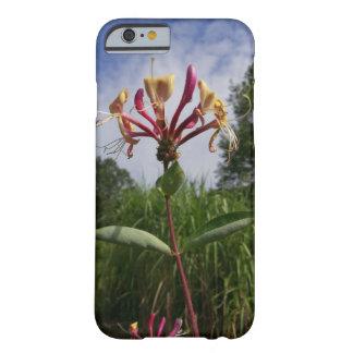 Coque iPhone 6 Barely There Geissblatt floraison et nuages