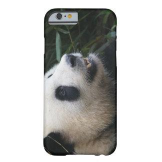Coque iPhone 6 Barely There Panda géant dans la forêt en bambou