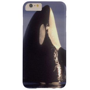 coque iphone 6 orque