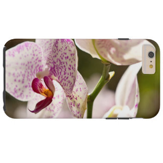 Coque iPhone 6 Plus Tough Orchidées par Shirley Taylor
