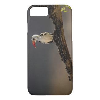 Coque iPhone 7 calao Rouge-affiché, erythrochynchus de Tockus,