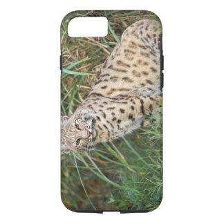 Coque iPhone 7 Chat sauvage (rufus de Felis)